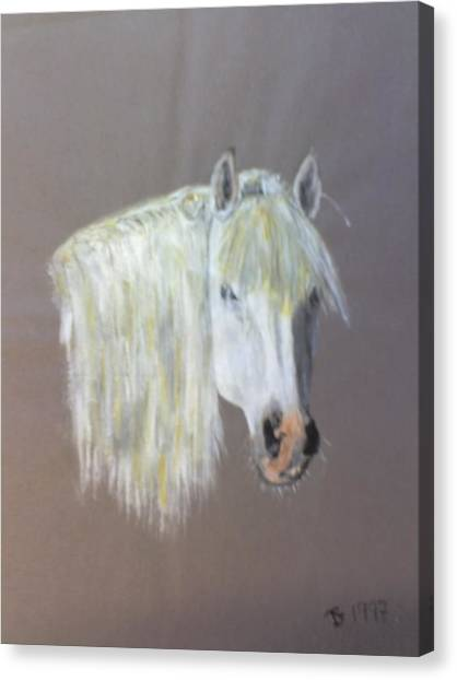 Wild Canvas Print by Stephen Thomson