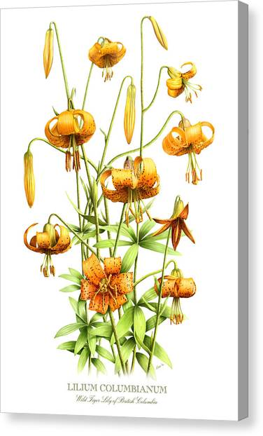 Wild Tiger Lilies Canvas Print