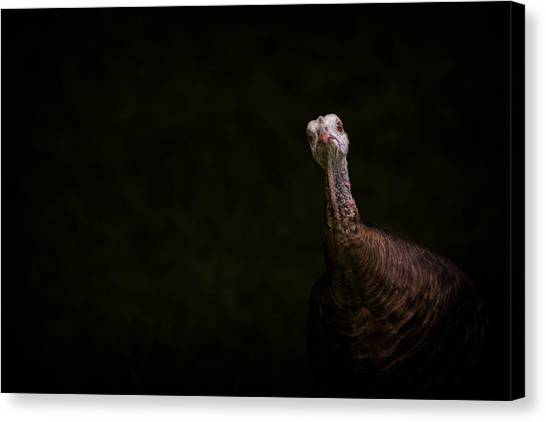 Wild Turkey Portrait Canvas Print
