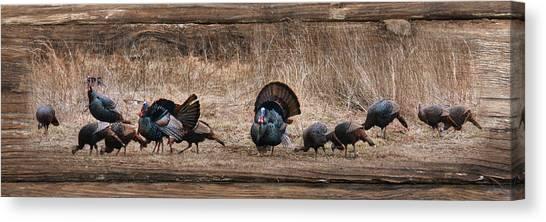 Turkey Dinner Canvas Print - Wild Turkeys by Lori Deiter