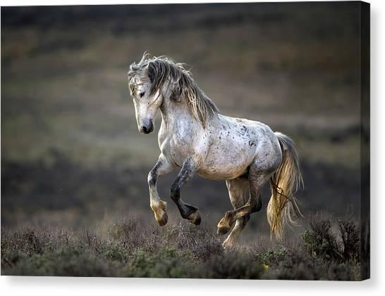 Jump Canvas Print - Wild Wild West by