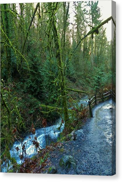 Wild Wood Trail Canvas Print by Charles Lucas