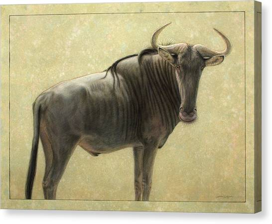 Bulls Canvas Print - Wildebeest by James W Johnson