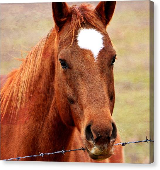 Wildfire - Equine Portrait Canvas Print