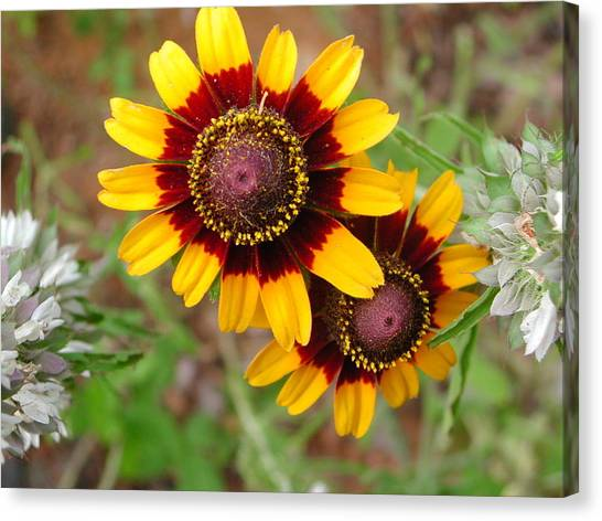 Wildflower 5 Canvas Print by Michael Rushing