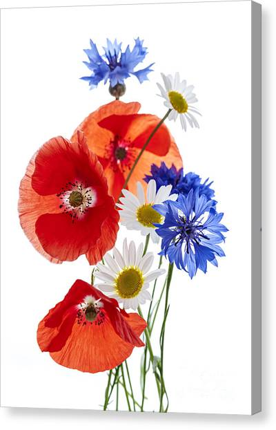 Bachelor Canvas Print - Wildflower Arrangement by Elena Elisseeva