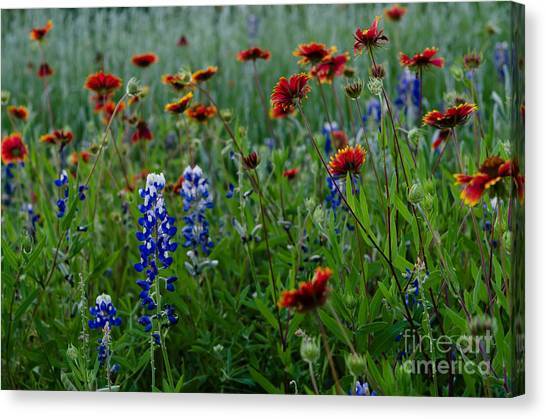 Wildflower Delight Canvas Print by Cathy Alba