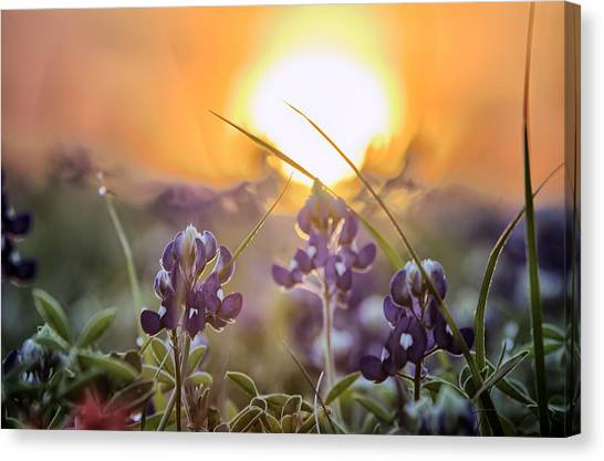 Wildflower Glow Canvas Print