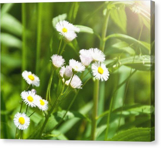 Wildflower Canvas Print by Kellie Prowse
