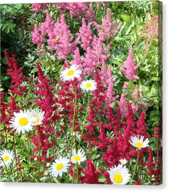 Wildflower Medley Canvas Print