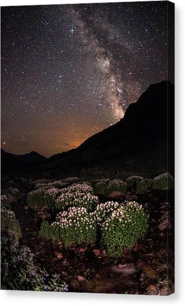 Wildflower Runoff Under The Stars Canvas Print