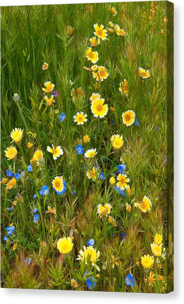 Wildflower Salad - Spring In Central California Canvas Print