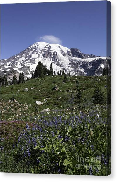Wildflower Season At Mt Rainier Canvas Print