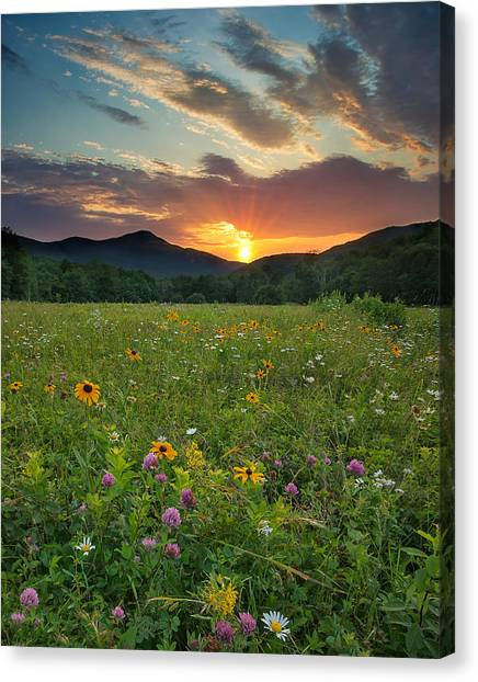 Wildflower Sunset Canvas Print