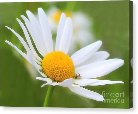 Wildflower Canvas Print by Sylvia  Niklasson