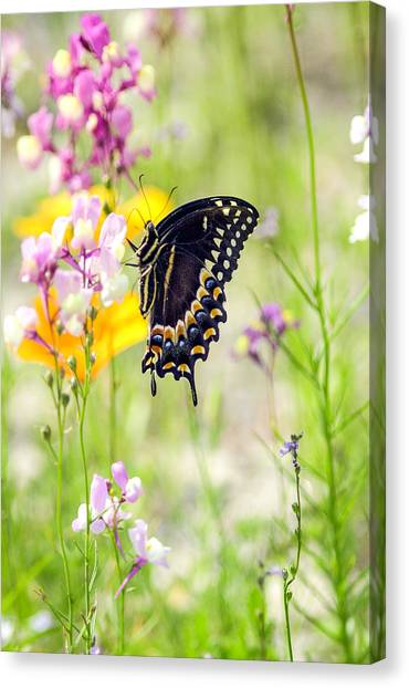 Wildflowers And Butterfly Canvas Print by Bill LITTELL
