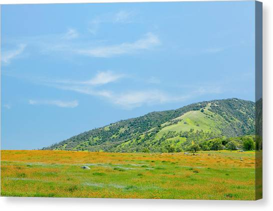 Afternoon Delight - Wildflowers And Cirrus Clouds - Spring In Central California Canvas Print