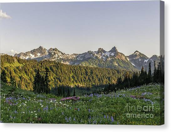 Wildflowers And The Tatoosh Range Canvas Print