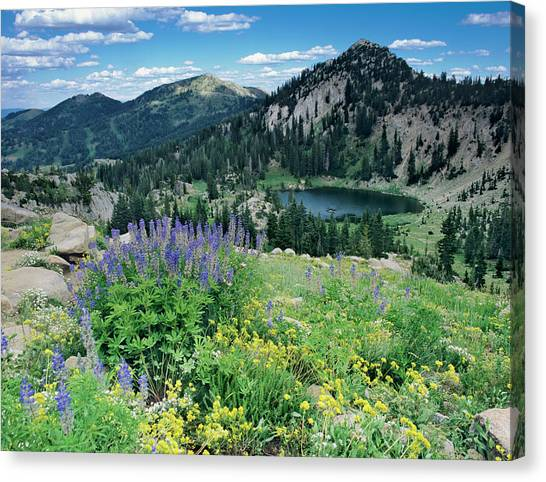 Uinta Canvas Print - Wildflowers And View Of Lake Catherine by Howie Garber