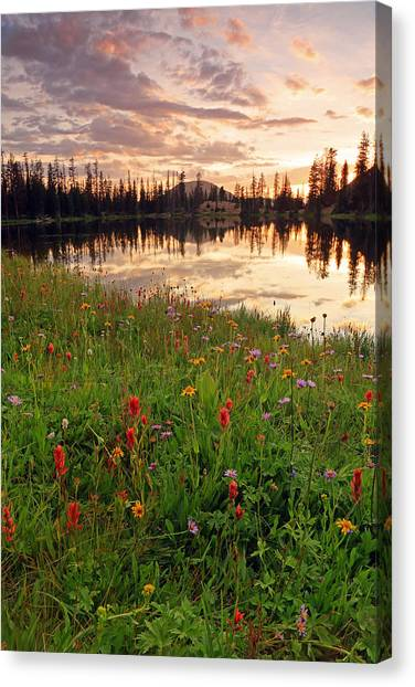 Uinta Canvas Print - Wildflowers At Clegg Lake. by Johnny Adolphson
