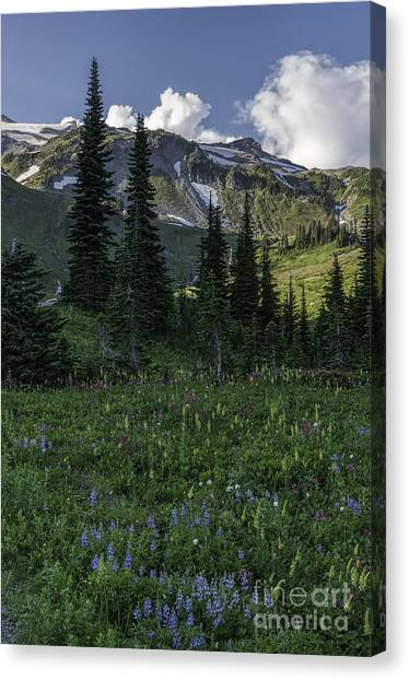 Wildflowers At Rainier Canvas Print