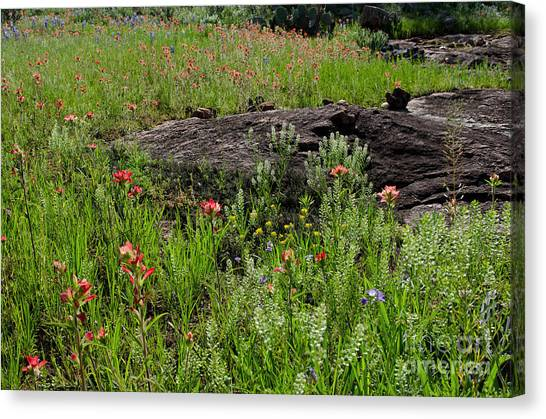 Wildflowers At Reveille Peak Ranch Canvas Print by Cathy Alba