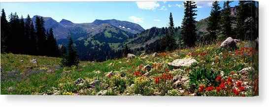 Teton National Forest Canvas Print - Wildflowers In A Field, Rendezvous by Panoramic Images