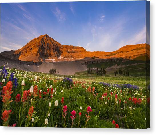 Wildflowers In Bloom Canvas Print