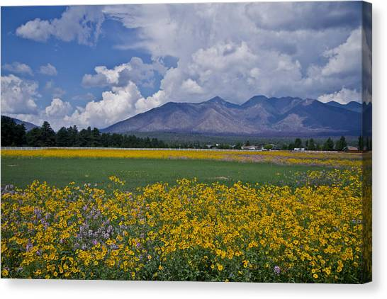 Wildflowers In Flag 9611 Canvas Print