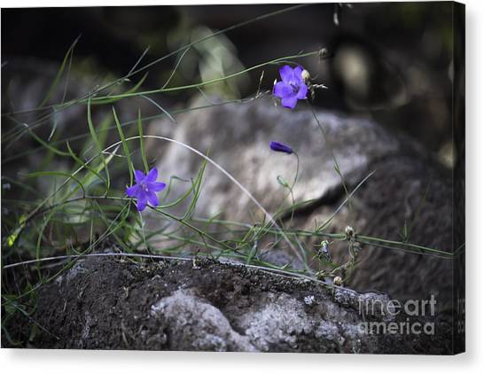Wildflowers On Rocks Canvas Print