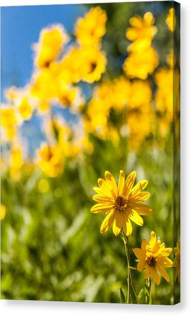 Pasture Canvas Print - Wildflowers Standing Out Abstract by Chad Dutson