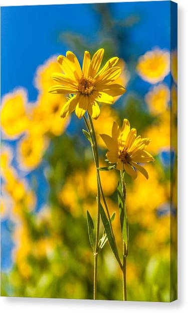 Wyoming Canvas Print - Wildflowers Standing Out by Chad Dutson