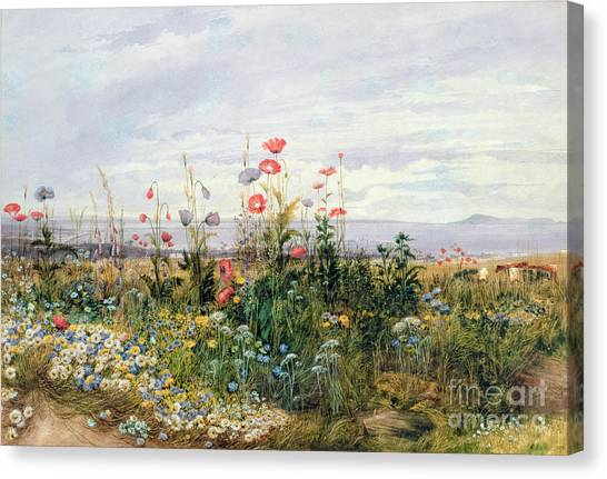Garden Flowers Canvas Print - Wildflowers With A View Of Dublin Dunleary by A Nicholl