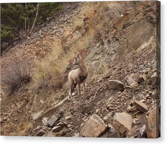Wildlife Of Montana Canvas Print by Yvette Pichette
