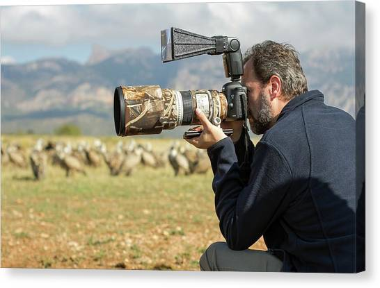 Griffons Canvas Print - Wildlife Photographer Nicolas Reusens by Nicolas Reusens