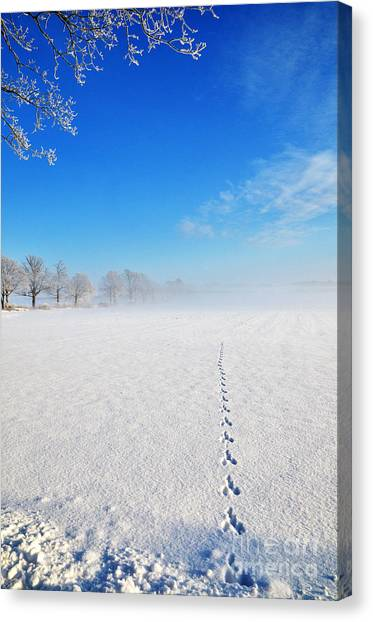 Wildlife Tracks Canvas Print