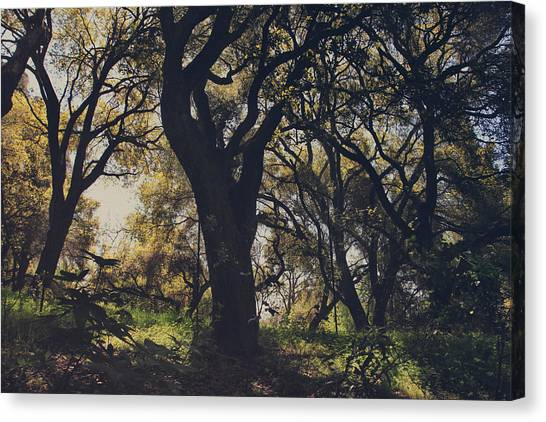 Trees Canvas Print - Wildly And Desperately My Arms Reached Out To You by Laurie Search