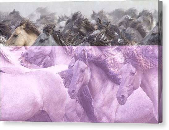Horses Galloping Canvas Print - Wildpferde by Dieter Uhlig