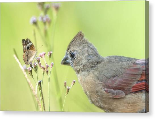 Buckeye Butterfly Canvas Print - Will You Be My Friend by Bonnie Barry