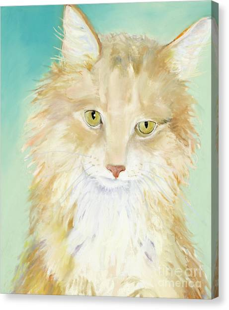 Main Coons Canvas Print - Willard by Pat Saunders-White