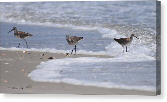 Willets On Ocracoke Canvas Print