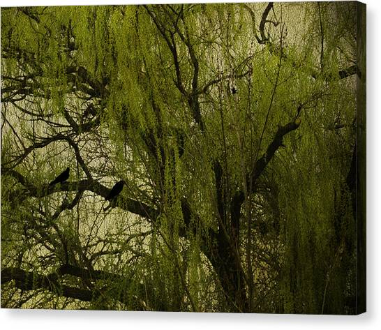 Weeping Willows Canvas Print - Willow Tree by Diane Schuster