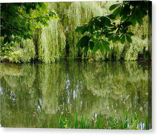 Willows Reflected Canvas Print