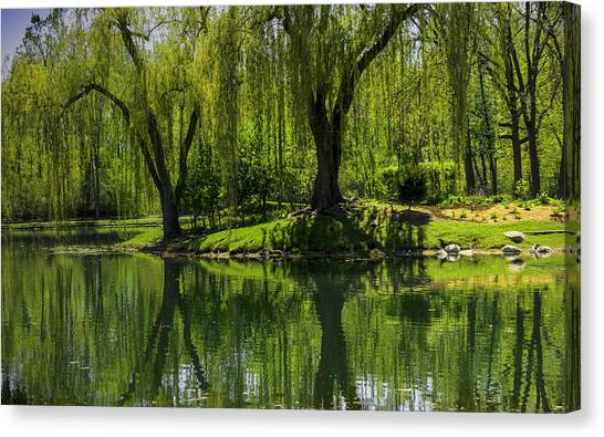 Willows Weep Into Their Reflection  Canvas Print
