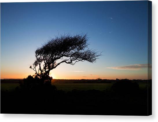Waterford Canvas Print - Wind Sculptured Hawthorn Tree, The by Panoramic Images