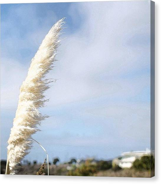 Ucsd Canvas Print - #wind #sky #white #blue #ucsd #salks by Anthony Wang