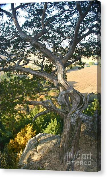 Wind Twisted Tree Canvas Print