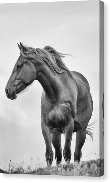 Windblown Horse Canvas Print