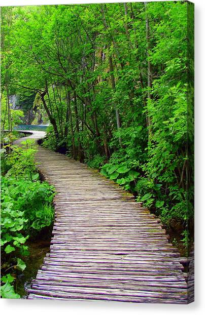 Winding Path Canvas Print