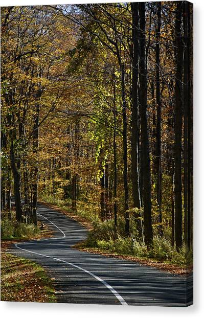Winding Road In The Woods Canvas Print